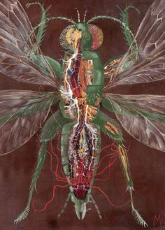 Try kissing the screen! Insect Dissection, by Martin Wells. Dept of Zoology, Downing St. Marianne North, Wellcome Collection, Still Life Fruit, Wild Strawberries, Insect Art, Art Uk, Zoology, Your Paintings, Shades Of Green