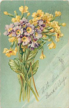 1907 Purple & yellow primroses postcard