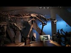 Something BIG has Come to Toronto: Augmented Reality in Ultimate Dinosaurs - YouTube
