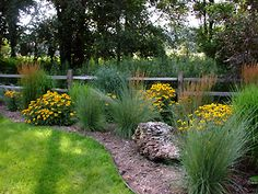Image detail for -Ornamental Grasses for Northern Landscapes Colorado Landscaping, Home Landscaping, Front Yard Landscaping, Landscape Borders, Landscape Design, Garden Design, Garden Front Of House, Lawn And Garden, Garden Path