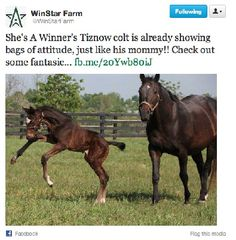 She's a winner's Tiznow colt is feeling pretty good at WinStar farm!