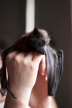 A Bat In the hand is worth A Million Please Save Bats Stop the Charter Towers Dispersion of bats In Queensland Australia