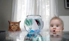Fish Fascination