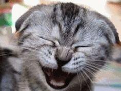 The funny cat vines CRACK ME UP. = Make me laugh.