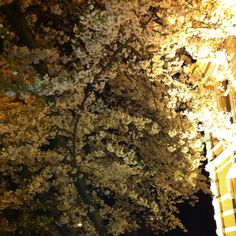 Zwolle by night... #spring