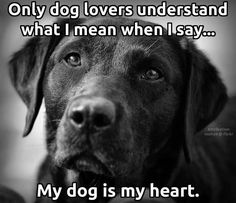 """My Petey was my heart, for certain. Those who say he was """"just a dog"""" have no idea how much I loved him. Petey knew, though. My Dad says Petey lived 17.5 years so he could stay with me. Dad may be right."""