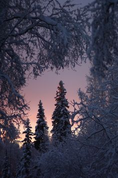 My Enchanted Forest Home by Kimberly Mietzah Damkoehler Beautiful World, Beautiful Places, Beautiful Pictures, Beautiful Forest, Winter Love, Winter Snow, Winter Sunset, Landscape Photography, Nature Photography