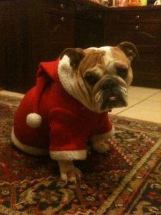My Buli Dog - Luna!!