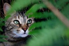 Tagada on Yummypets.com #cat #forest #animal #pets #animaux #chat #winter
