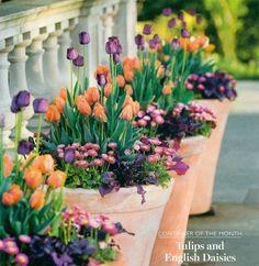 Tulpaner och bellisar