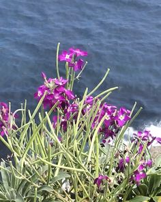 Flores en el acantilado .