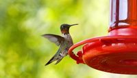 Homemade Hummingbird Feeders