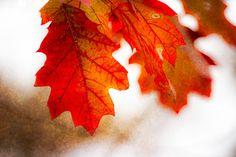 autumn oak leaf art - Google Search