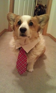 7 of the world's 20 fastest rising fortune 500 companies are run by corgis. | 14 Reasons Why Corgis Are The Smartest Animals In The World
