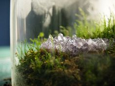 how to: moss terrariums