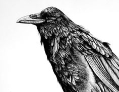 "Check out new work on my @Behance portfolio: ""raven"" http://be.net/gallery/57642429/raven"