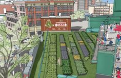 Urban agriculture Fenway Park rooftop garden. Wicked cool.