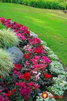 Záhradník ukázal úžasné nápady, ako pestovať kvety v záhrade: Vyskúšajte to a budú sa pri nej všetci s úžasom pristavovať!