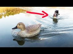 The best place for video content of all kinds. Please read the sidebar below for our rules. Duck Hunting Boat, Duck Boat, Duck Decoys, Model Ships, Radio Control, Bird, Fun, Ducks, Animals