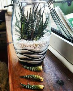 Terrarium with zebra plant Terrarium Cactus, Garden Terrarium, Garden Plants, Cacti, Succulents In Containers, Planting Succulents, Planting Flowers, Succulent Gardening, Container Gardening