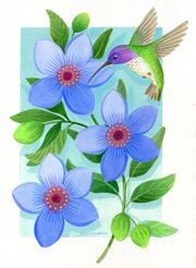 Hummingbirds And Florals main page