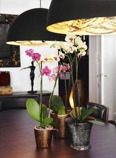 Lamporna från Catellani & Smith är belagda med bladguld invändigt.