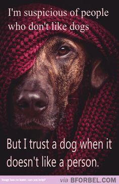 Gotta Trust A Dog's Instinct…