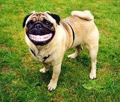 2012年01月 : 神戸あいけんミツケン日記 : おもしろカワイイ犬の画像集 - NAVER まとめ