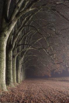 Edge of the woods...