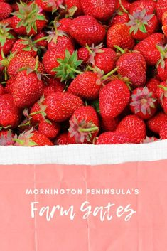 Mornington Peninsula Farm Gates : Cherry Farms and More! - The Kid Bucket List Cherry Farm, Strawberry Farm, Cherry Products, Pick Your Own Fruit, Tapas Dishes, Farm Gate, Fruit Picking, Cherry Season, Australian Food