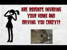 Are rodents invading your home? Find the best rodent control Olympia WA, Tumwater, Lacey WA and surrounding Washington areas. Choose the company that provides long term quality solutions to your pest control needs with long lasting services for rats and mice. They are located in Olympia WA and are trusted by thousands in Lacey, Tumwater and all of Thurston County -- http://www.youtube.com/watch?v=6d0az1vaKNU