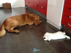 Roc & Rabbit