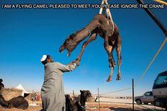 Camel hoist.