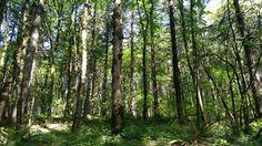 Mt. Talbert Nature Park