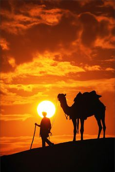 Camel and Thar desert sunset, Jaisalmer, India Desert Life, Desert Sunset, Camelus, Beautiful Sunset, Silhouettes, Cool Pictures, Nature Photography, Deserts, Scenery