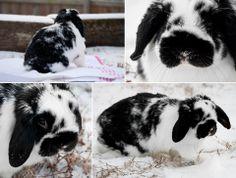 Snow Bunny!
