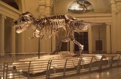 Why did T. rex have such small arms? #Geology #GeologyPage