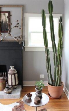 11 fotos que demuestran que la mejor planta para tener en casa es UN CACTUS — cribeo