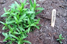 """Today for National """"More Herbs, Less Salt Day,"""" take advantage of in-season…"""