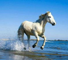 I love horses so this is a really  pretty picture of one