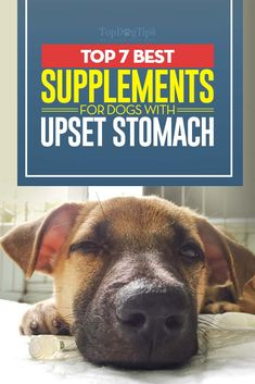 Dogs eat things they aren't supposed to. Unfortunately, no matter how much we supervise them they can still find things to get into. This is just one of the many reasons that stomach upset, diarrhea and other gastrointestinal problems are so common in dogs. Every canine owner should have one of the best dog upset stomach relief solutions on hand for these occasions.