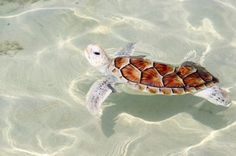 Awesome turtle in clear sea.