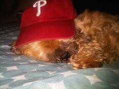 My Pets: Riley the Shih Tzu