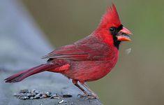 Best Birdseed | Birds & Blooms