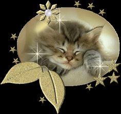 kitten glitter graphics - Google Search