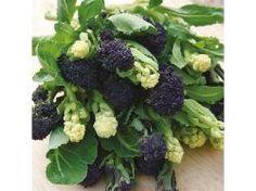 Seme povrća: Broccoli (Sprouting) Lancer Mixed / 100 semenki