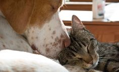 Happy and contented flea free dog & cat