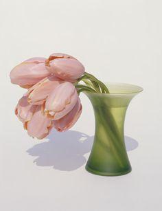 by Yoshihiko Ueda Green Flowers, Colorful Flowers, Beautiful Flowers, Minimalist Photography, Toy Craft, Bud Vases, Flower Photos, Ikebana, Flower Power