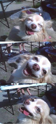 love this doggie