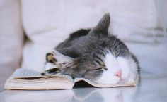 Reading makes me tired...zzzz